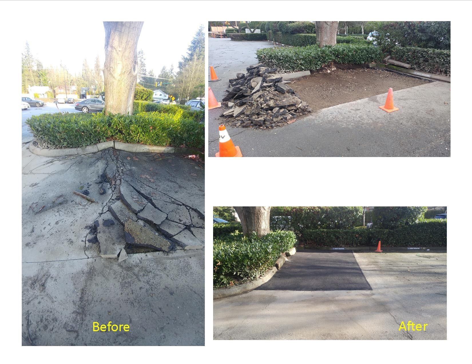 Parking lot repair - tree root damage